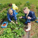 Работа для студентов,сезонная,в Польше