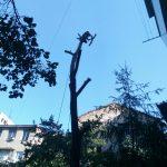 100% аккуратно спилить дерево любой сложности