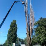 Спилим дерево любой сложности в Одессе.